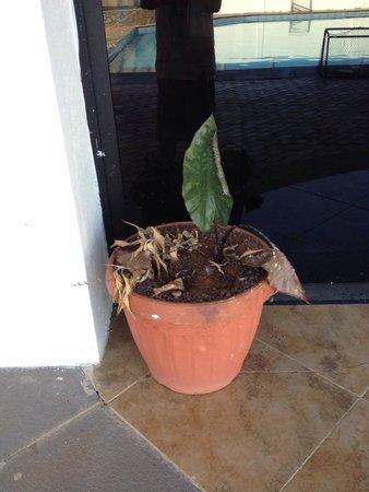 The Eco Hotel Arena Blanca : Las plantas en estado de descuido