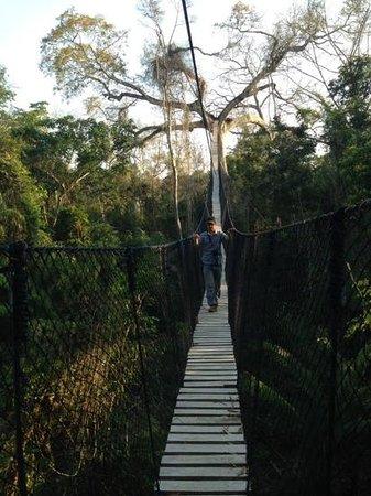 Estancia Bello Horizonte: la piattaforma sull'albero vicino all'Estancia