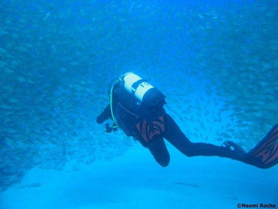 Centro de Buceo Aqua-Marina: Swimming through a school of fish