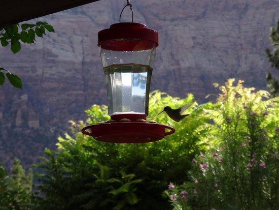 Cliffrose Lodge & Gardens: Vor den Zimmern  Kolibritränke mit Kolibri