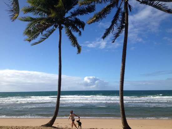 Bahia Surf Camp: Right outside the camp