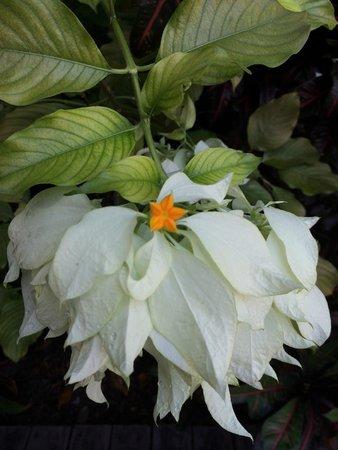 The Duval House: Garden Flower