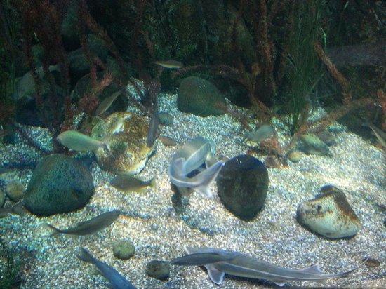 Lido di Jesolo Sea Life Aquarium: Bassin