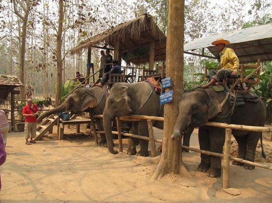 Tad Sae Waterfall: Éléphants sur le site
