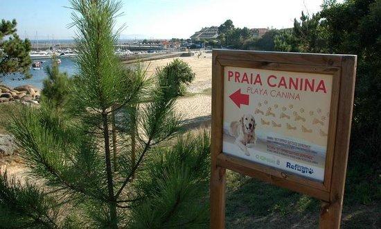Hotel Varadoiro: Dos playas caninas en los alrededores