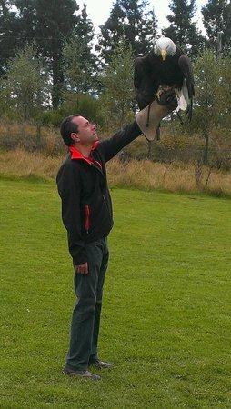 Phoenix Falconry: Beautiful unforgettable sight!!!