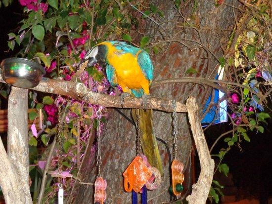 Cheeki Tiki : Le perroquet du bar