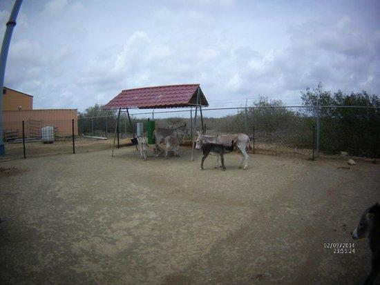 Donkey Sanctuary Bonaire: Nursery feeding area