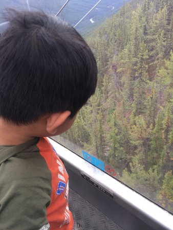 Banff Gondola : Great view from the gondola