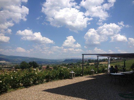Locanda Palazzone: Terrace