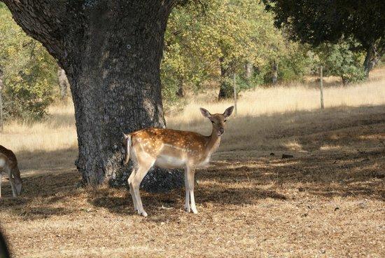 Palacio Real de Riofrio: Bambi
