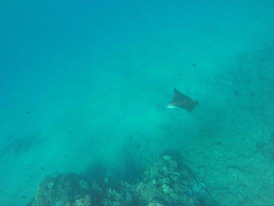 Black Rock : Awesome snorkeling spot