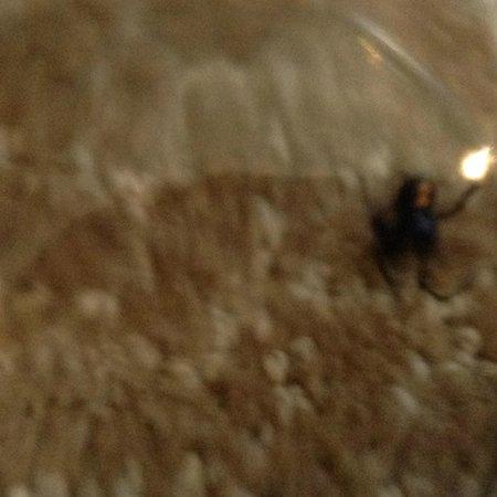 Hyatt Regency Indian Wells Resort & Spa: Another Black widow trapped in glass