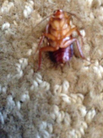 Hyatt Regency Indian Wells Resort & Spa: My Cockroach Friend