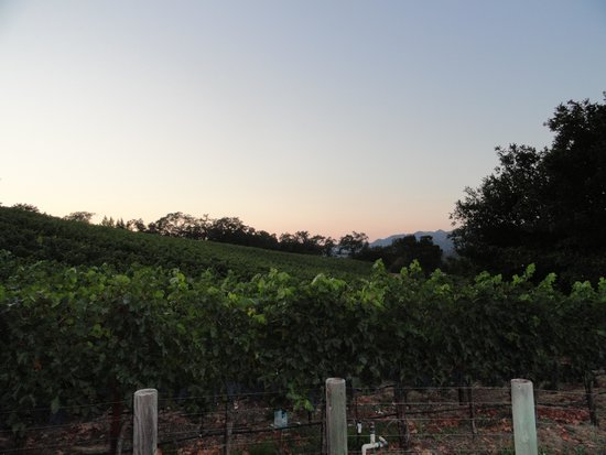 Wine Country Inn & Cottages: Vines in the back
