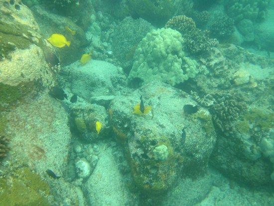 Torpedo Tours: Scuba fish