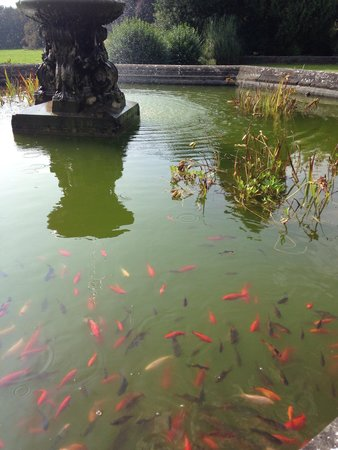 The Spa at Thoresby Hall: Fishes in the fountain.