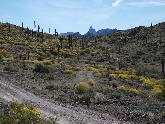 Apache Trail Tours: Weavers Needle