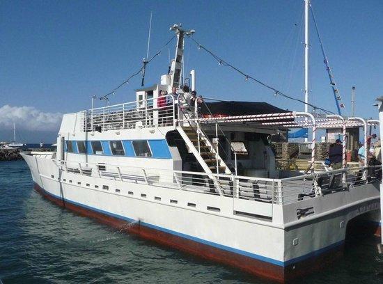 Lahaina Cruise Company : Whale watching boat.