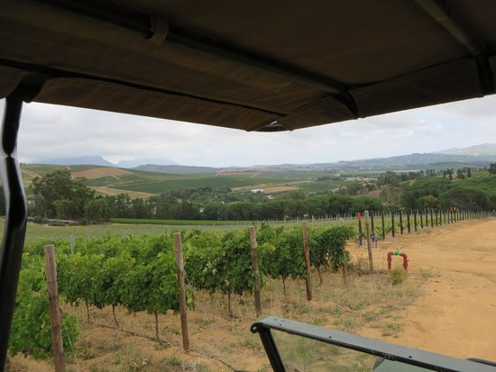 Warwick Wine Estate: Wine safari