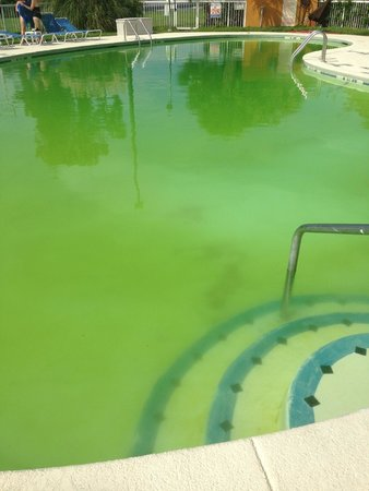 Clarion Inn: Dirty and Green Pool