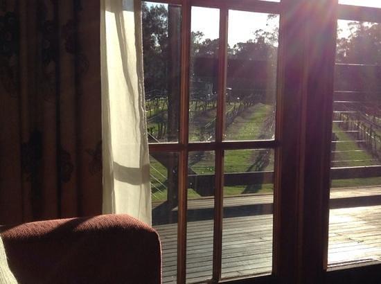 Hermitage Lodge : vineyard at your doorstep