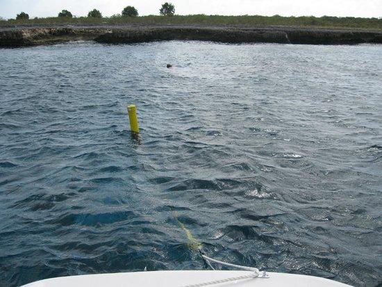 Blue Bay Bonaire: Snorkel buoy off Klein Bonaire