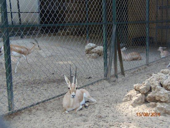 Animaux superbe zoo picture of le jardin d 39 essai du - Les animaux du jardin ...