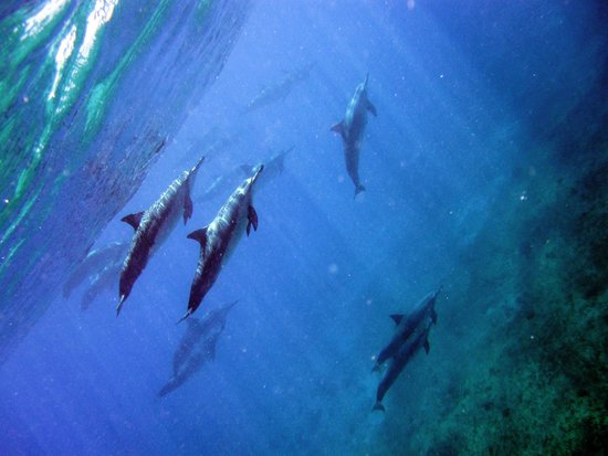 Wild Side Specialty Tours: dolphins!