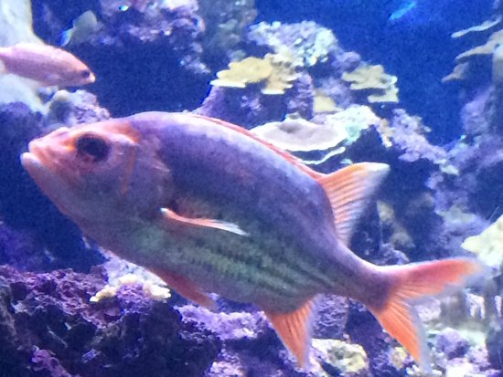 Maui Ocean Center : Fast colorful fishes.