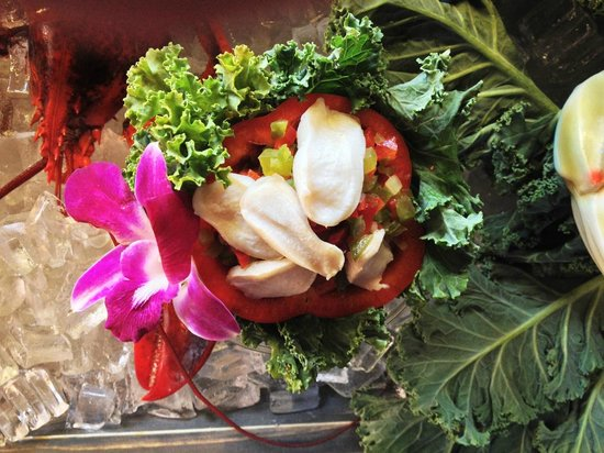 Conch ceviche picture of marco island fish company for Island fish company