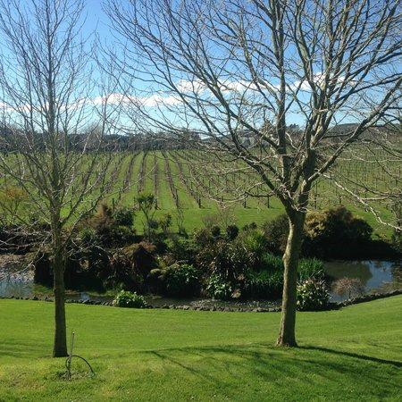 Auckland Fine Wine & Food Tours: Vineyard at West Brook Winery