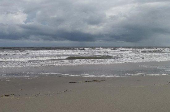 Huntington Beach State Park : Beautiful ocean!