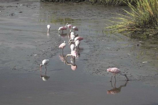 Huntington Beach State Park : Fun watching the birds!