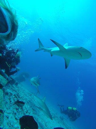 Dive Safaris: Je kan de haaien goed bekijken en zelfs soms voelen