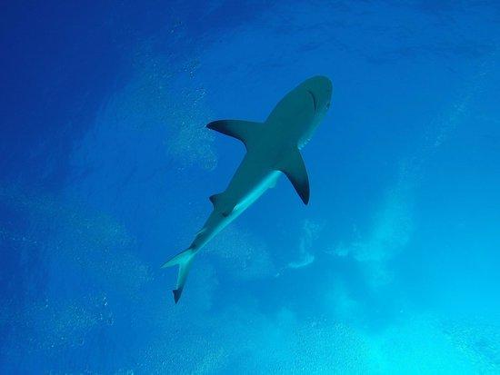 Dive Safaris: Ze zwemmen overal