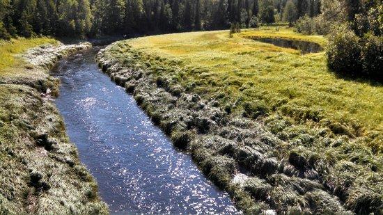 Nikiski, Alaska: Swanson River Fit For A Canoe