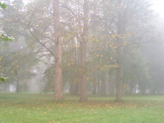 Hatanpää Arboretum: Mist in the park