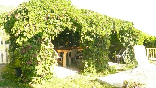 pergola en vigne vierge photo de au pilon riez tripadvisor. Black Bedroom Furniture Sets. Home Design Ideas