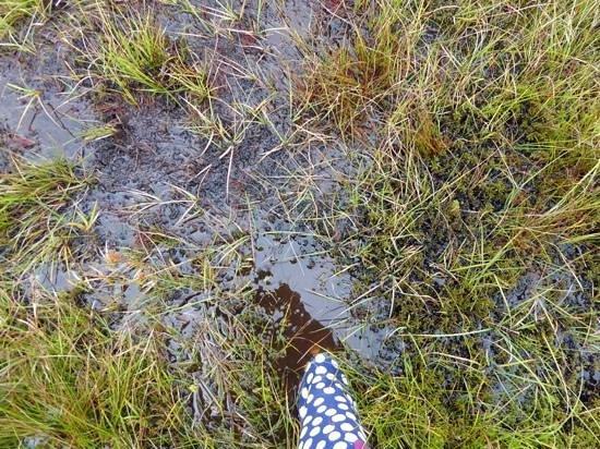 Ardgay, UK: bring good shoes for hillside walks!!