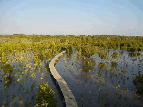 Toliara, Madagascar : View of boardwalk and replanted mangroves from viewpoint tower.
