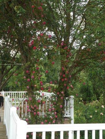Roses du jardin picture of les chemins de la rose doue la fontaine tripadvisor - Jardin de la rose doue la fontaine ...