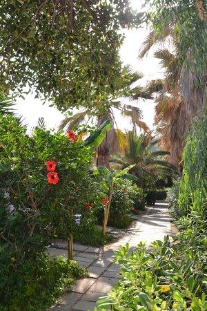 Villaggio Torre Ruffa Robinson: Vialetto