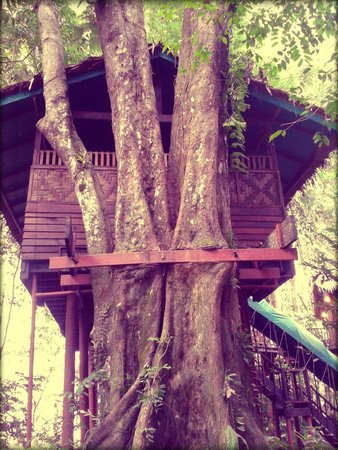 One of the treehouse bungalows
