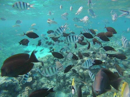 TOPDIVE Bora Bora: jardin de corail