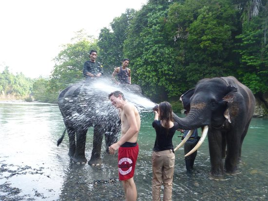 Expedition Jungle : Elephants were a blast