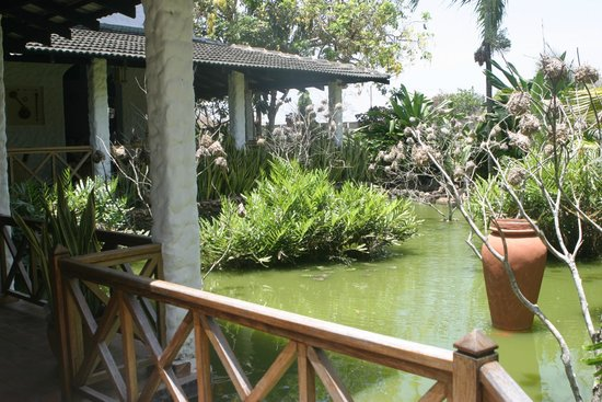 Pinewood Beach Resort & Spa: Wildlife Pond at the Lounge Bar