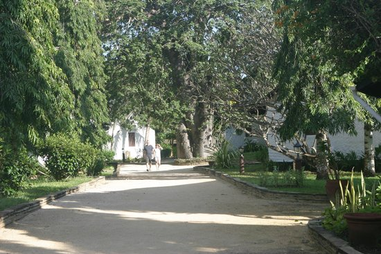 Pinewood Beach Resort & Spa : Pinewood Resort & Spa Garden pathway