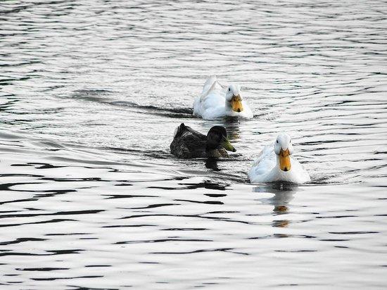 Shidakako Lake: 3羽で仲良く泳いでいて微笑ましかったです