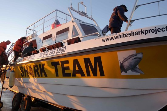 White Shark Projects: Boat